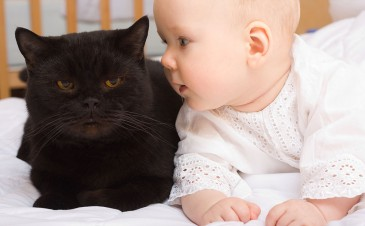 How to introduce your cat to your new baby