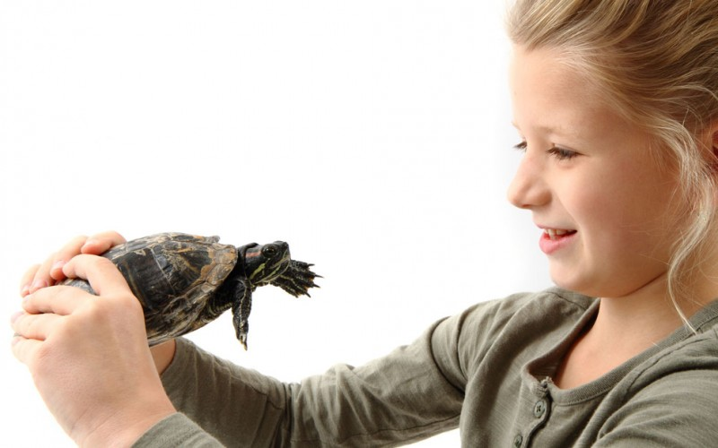 Pet turtles and salmonella