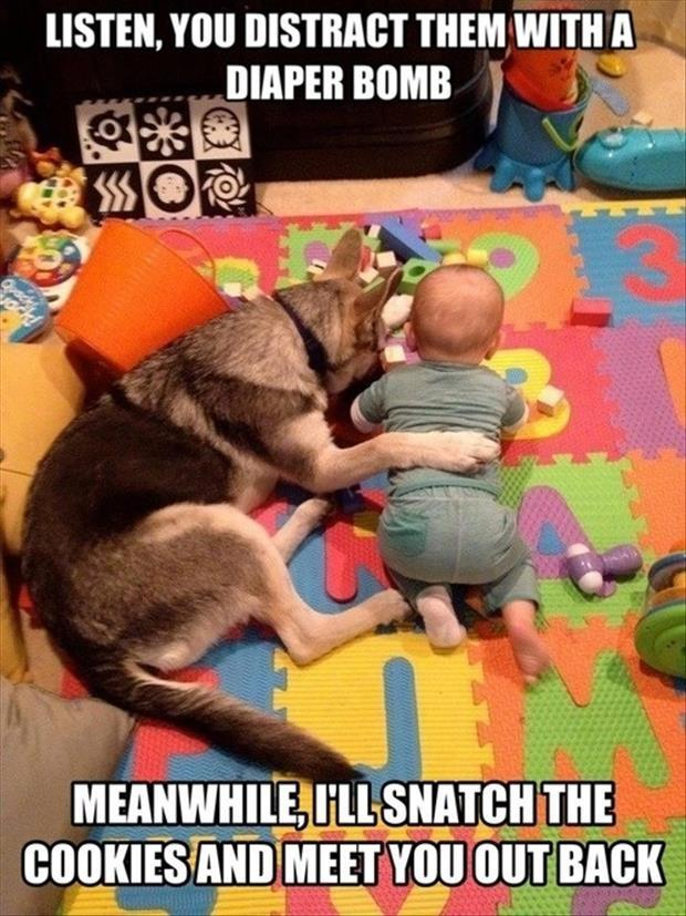 funny-babies-and-dogs1