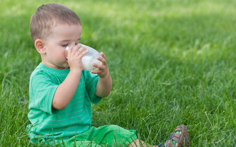 Why should young toddlers drink whole milk?