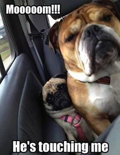 pugs-hes-touching-me