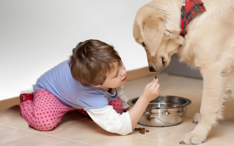 Is it dangerous if my kid eats pet food?