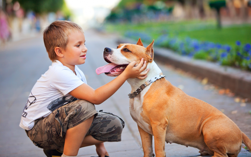 What to do if your child is cruel to animals